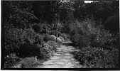 view [Unidentified Sites]: a garden in an unidentified location. digital asset: [Unidentified Sites] [negative]: a garden in an unidentified location.