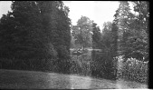 view [Unidentified Sites]: trees and other plants in an unidentified location. digital asset: [Unidentified Sites] [negative]: trees and other plants in an unidentified location.