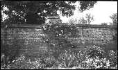 view [Unidentified Sites]: a garden border backed by a brick wall in an unidentified location. digital asset: [Unidentified Sites] [negative]: a garden border backed by a brick wall in an unidentified location.