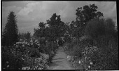 view [Unidentified Sites]: an unidentified garden in the style of Gertrude Jekyll. digital asset: [Unidentified Sites] [negative]: an unidentified garden in the style of Gertrude Jekyll.