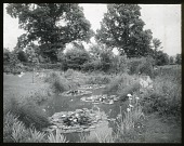 view Unidentified Garden in Wiltshire, England: a lily pond in an unidentified location. digital asset: Unidentified Garden in Wiltshire, England [lantern slide]: a lily pond in an unidentified location.