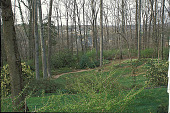 view [Lothrop Garden]: view from back of the house looking down onto woodland garden. digital asset: [Lothrop Garden]: view from back of the house looking down onto woodland garden.: 2002 Mar.