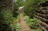 view [Woods' Côte]: flagstone walkway between house and stone wall with hosta plantings. digital asset: [Woods' Côte]: flagstone walkway between house and stone wall with hosta plantings.: 2005 Jun.