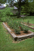 view [Woods' Côte]: rose garden with deer-proof electric fence. digital asset: [Woods' Côte]: rose garden with deer-proof electric fence.: 2005 Jun.