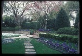 view [Sewell Garden]: a dusting of snow and purple hyacinths in front garden. digital asset: [Sewell Garden]: a dusting of snow and purple hyacinths in front garden.: 2010 Dec.