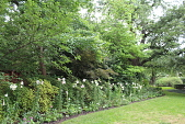 view [Shutt Garden]: white lilies border the back of the property next to the lawn. digital asset: [Shutt Garden]: white lilies border the back of the property next to the lawn.: 2017 May.
