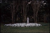 view [Louise Jordan's Garden]: a statue of St. Francis is surrounded by white pansies. digital asset: [Louise Jordan's Garden]: a statue of St. Francis is surrounded by white pansies.: 2010 Feb.