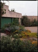 view [David-Peese Garden]: Cactus and wild flowers grow near garage, surrounded by gravel. digital asset: [David-Peese Garden] [transparency]: Cactus and wild flowers grow near garage, surrounded by gravel.
