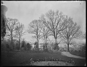view [Miscellaneous Images in Virginia]: oaks and a flower bed in early spring at an unidentified location. digital asset: [Miscellaneous Images in Virginia] [glass negative]: oaks and a flower bed in early spring at an unidentified location.