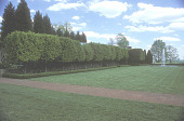 view [Mount Sharon Farm]: Italianate croquet pitch with pleached European hornbeam; and moon fountain at end. digital asset: [Mount Sharon Farm]: Italianate croquet pitch with pleached European hornbeam; and moon fountain at end.: 2004.