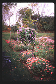 view [Christopher Place]: close-up of southern beds in farmhouse garden. digital asset: [Christopher Place]: close-up of southern beds in farmhouse garden.: 1997 Oct.