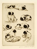 view Yosa, a Japanese Spaniel digital asset number 1