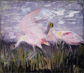 view Roseate Spoonbills, study for book Concealing Coloration in the Animal Kingdom digital asset number 1