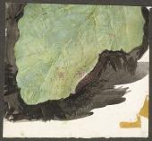 view Heterocampa Biundata, Walker, study for book Concealing Coloration in the Animal Kingdom digital asset number 1