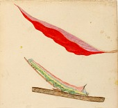 """view """"Mirror-Back"""" Caterpillar, study for book Concealing Coloration in the Animal Kingdom digital asset number 1"""
