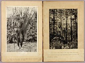 view Kalinga Warriors and N. American Indians, study folder for book Concealing Coloration in the Animal Kingdom digital asset number 1