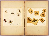 view INSECTS--Colored (Best Bumblebees...), study folder for book Concealing Coloration in the Animal Kingdom digital asset number 1