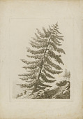 view A Pine Tree digital asset number 1