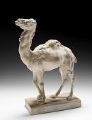 view Camel digital asset number 1
