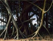 view Banyan Tree digital asset number 1