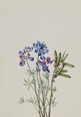 view Untitled--Flower Study digital asset number 1