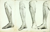 view Study of Anatomy, #5 digital asset number 1
