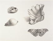 view Shells and Moth digital asset number 1