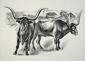 view Long-Horn Steers digital asset number 1