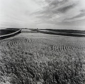 view Kiowa County, from the Kansas Documentary Survey Project digital asset number 1