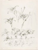 view Untitled (Lilies and Ground-Ivy) (Glecoma Hederacea) digital asset number 1