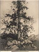view Old Pine and Cedar digital asset number 1