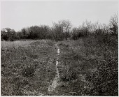 view Untitled, from the series The Pond digital asset number 1