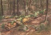 view Forest Scene digital asset number 1