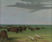 view Buffalo Hunt under the Wolf-skin Mask digital asset number 1