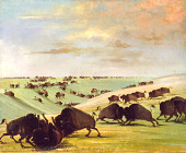 view Buffalo Bulls Fighting in Running Season, Upper Missouri digital asset number 1
