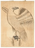 view Calligraphic Rendering of an Eagle digital asset number 1