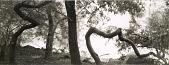 view Central Park, New York City digital asset number 1
