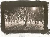 view Weeping Crab Apple, Bernheim, Kentucky digital asset number 1