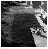view Back Yard, Diamond Bar, CA, from the Los Angeles Documentary Project digital asset number 1