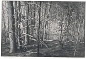 view Uccello's Wood (Gothic Landscape 14) digital asset number 1
