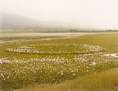 view Water Hyacinth, Chapala, Jalisco, Mexico, from the portfolio Shadowless Places, Deserts of the Southwest digital asset number 1