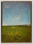 view Untitled (field of green grass and yellow flowers) digital asset number 1