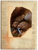 view Untitled (Audubon's Snow Owls) digital asset number 1