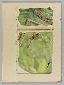 view Untitled (owl on broken birdfeeder) digital asset number 1