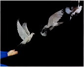 view Pigeon Release digital asset number 1