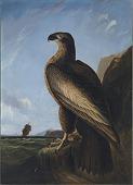 view Washington Sea Eagle digital asset number 1