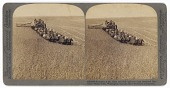 view Evolution of the sickle and the flail--33-Horse Team Combined Harvester-- Walla Walla, Washington digital asset number 1