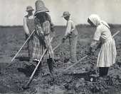 view Young Russian Immigrants Hoeing Sugar Beets, Colorado digital asset number 1