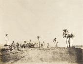 view Palms Along the Nile digital asset number 1