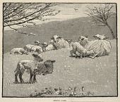 view Spring Lamb, from Scribner's Monthly, June 1880 digital asset number 1